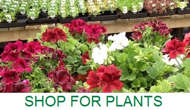 Shop for Plants